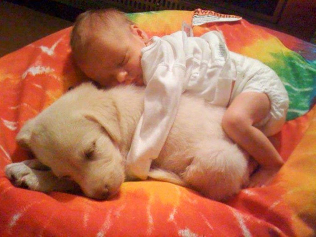 Картинки по запросу малыши с собаками